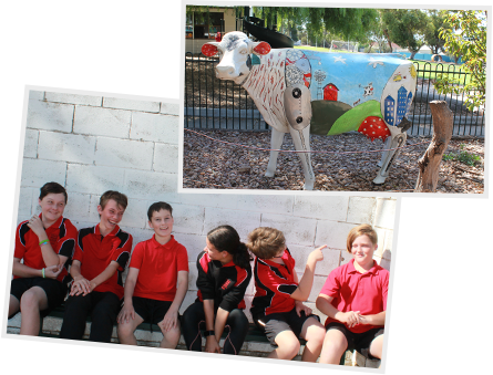Jervois Primary is a regional school with approximately 100 R-Year 7 enrolments across 4 classes.